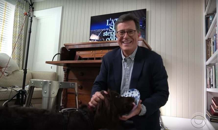 Stephen Colbert's dog makes glorious cameo in his latest home monologue