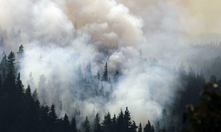 Oregon's wildfire season may cost $100M as state cashes in on insurance policy